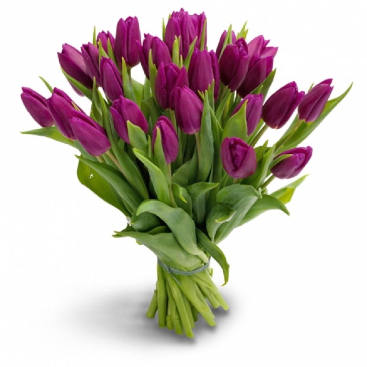 19 лилави лалета