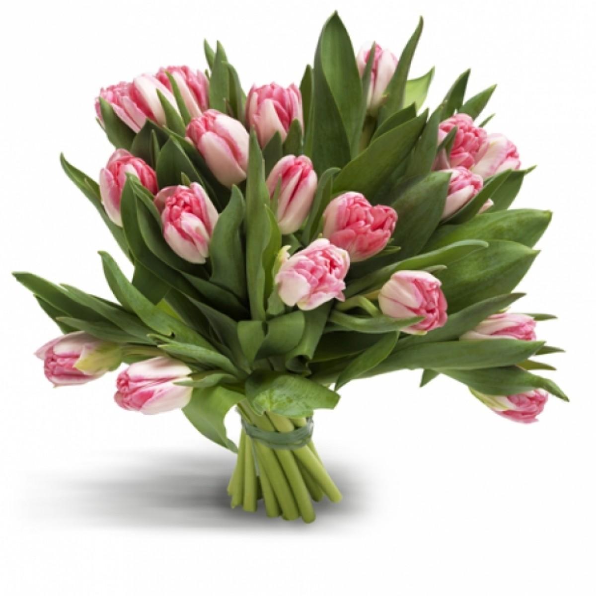 19 розови лалета